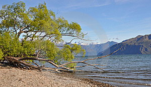 Lake Wanaka Willows, New Zealand Stock Photos - Image: 16998723