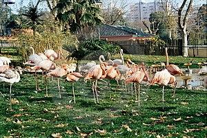Bird Group Free Stock Photos