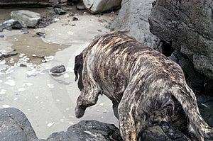 Pies na plaży 4 Obraz Stock
