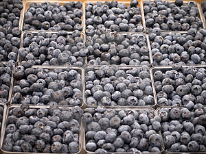 Blueberries Free Stock Photo
