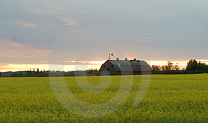 Granero viejo en campo del canola Imagen de archivo