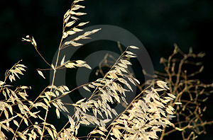 Wild Grasses Stock Images