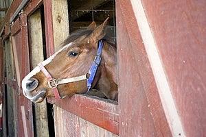 Horse Head Free Stock Photos