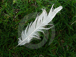 Feather in the grass Royalty Free Stock Image