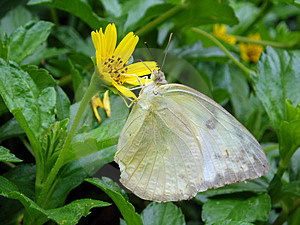Photo Of Butterfly With Flower Stock Photo