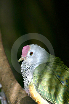 Cute Bird Royalty Free Stock Image