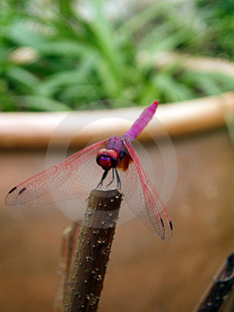 Photo Of Dragonfly Free Stock Photo