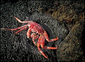 Crab On Rock Free Stock Photo