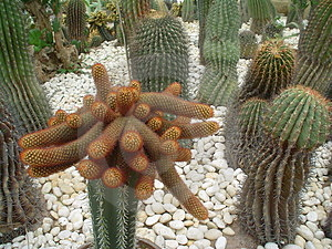 Kaktus 1 Lizenzfreies Stockbild