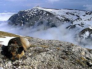 Moraru Ridge - Bucegi Mountains Stock Photography
