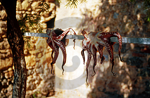 Octopus Free Stock Photos