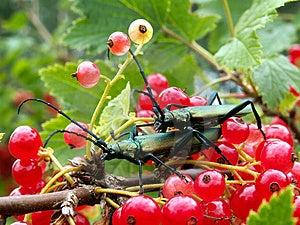 Dos insectos Fotografía de archivo libre de regalías
