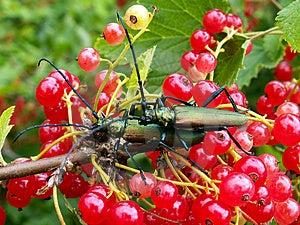 Dos insectos Fotos de archivo libres de regalías