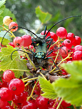 Dos insectos Imágenes de archivo libres de regalías