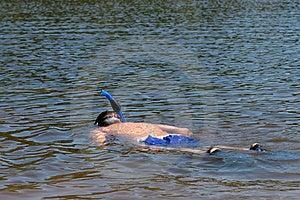 Boy Snorkeling In Lake Stock Image