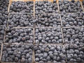 Blueberries Free Stock Photo