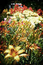 Blanket of Flowers Stock Photography
