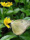 Photo of butterfly with flower