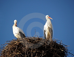 STORK NEST Royalty Free Stock Photography - Image: 1707297