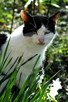 Cat and flowers 2