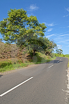 The Road And The Tree Stock Photo - Image: 17006000