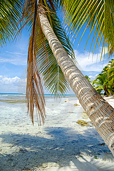 Palm Hanging Over Beach Royalty Free Stock Photo - Image: 17009085