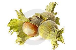 Three Hazelnuts Stock Image - Image: 17010321