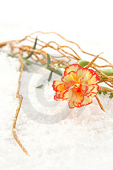 Carnation On The Snow Royalty Free Stock Images - Image: 17011019