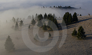 Misty Forest Stock Images - Image: 17021884