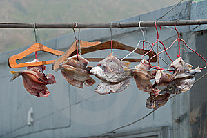 Dried Fishes On The Bar Stock Image - Image: 17025011