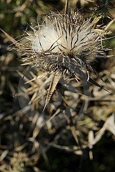 Plantas Medicinales De Europa Imagenes de archivo - Imagen: 17035594