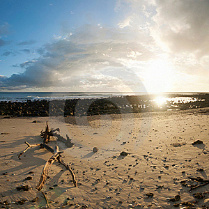 Sunrise On Beach With Branch In Foreground Royalty Free Stock Photos - Image: 17035628