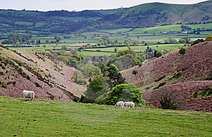 A Rural Landscape In Shropshire, England Stock Images - Image: 17041444