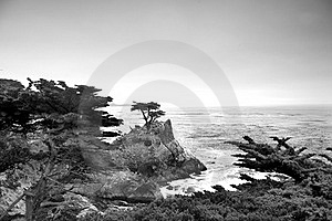 Lonely Pine At The 17-Mile Drive Royalty Free Stock Images - Image: 17045329