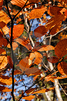 Autumn Leaves Stock Image - Image: 17055581