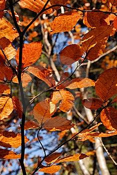 Autumn Leaves Stock Image - Image: 17055581