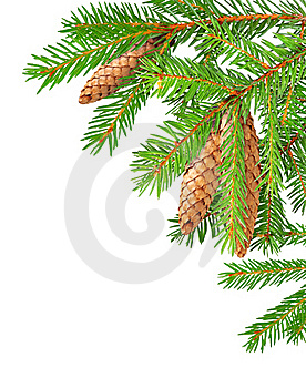 Fir Branches Stock Images - Image: 17064684