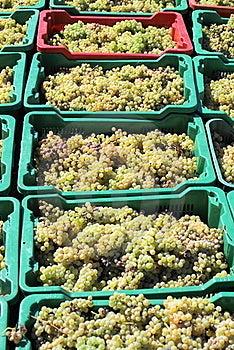 Carry Grapes Stock Photos - Image: 17067703
