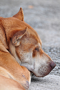 Sleeping Dog Royalty Free Stock Photos - Image: 17068778