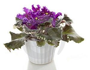 Pot Flower Stock Photo - Image: 17076670