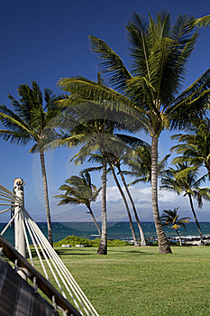 View From The Shady Hammock Stock Photo - Image: 17077840
