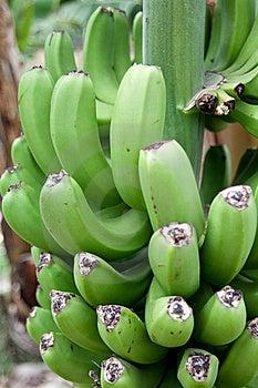 Banana Stock Images - Image: 17089634