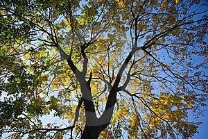 Fall Foliage Through Sunlight Near Sunrise Royalty Free Stock Image - Image: 17097386