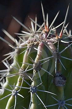 Macro De Cactus Photo libre de droits - Image: 1714835