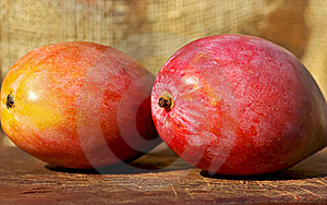 Two Mangoes Fruits. Royalty Free Stock Photos - Image: 17108538