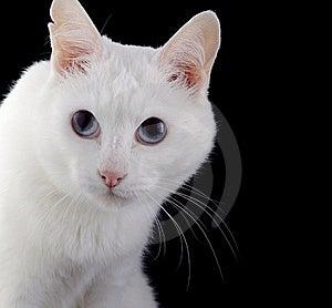 Cat Stock Photo - Image: 17109160