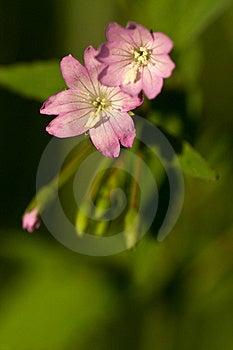 Pink Flower Stock Photos - Image: 17113513