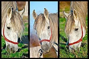Three Horses Royalty Free Stock Photo - Image: 17144245