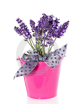 Purple Lavender In A Pink Bucket Royalty Free Stock Images - Image: 17145479