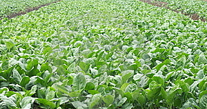 Vegetables Farms Royalty Free Stock Photos - Image: 17149998